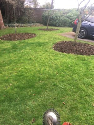 Rams Grounds Maintenance Gardening (6)