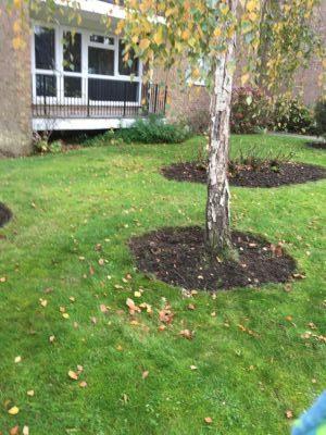 Rams Grounds Maintenance Gardening3 (6)
