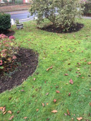 Rams Grounds Maintenance Gardening3 (7)